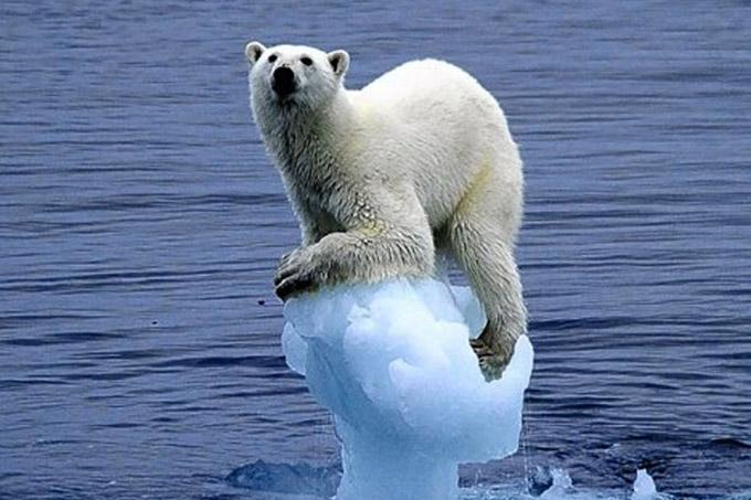 Hielo del Ártico en peligro