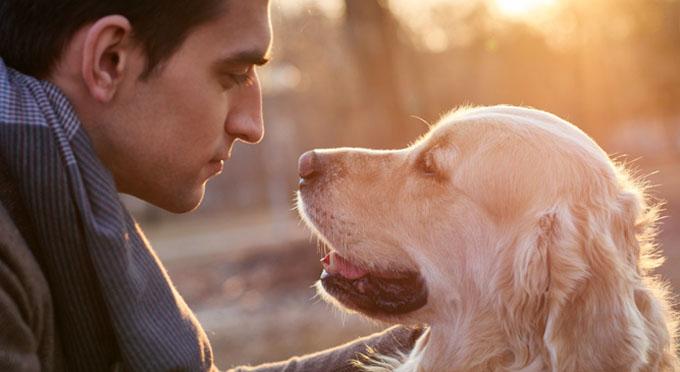 Identifican en los perros los genes para ser sociables