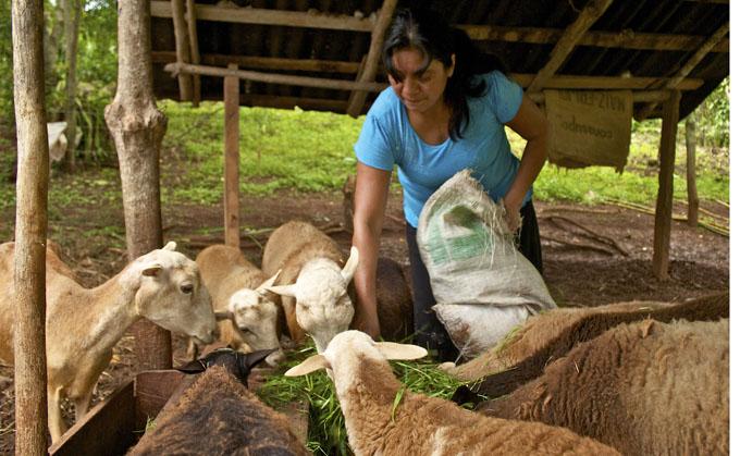 Mujeres aportan mitad de producción mundial de alimentos