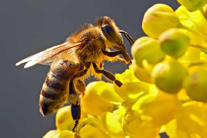 Las abejas, fieles aliadas para la seguridad alimentaria mundial