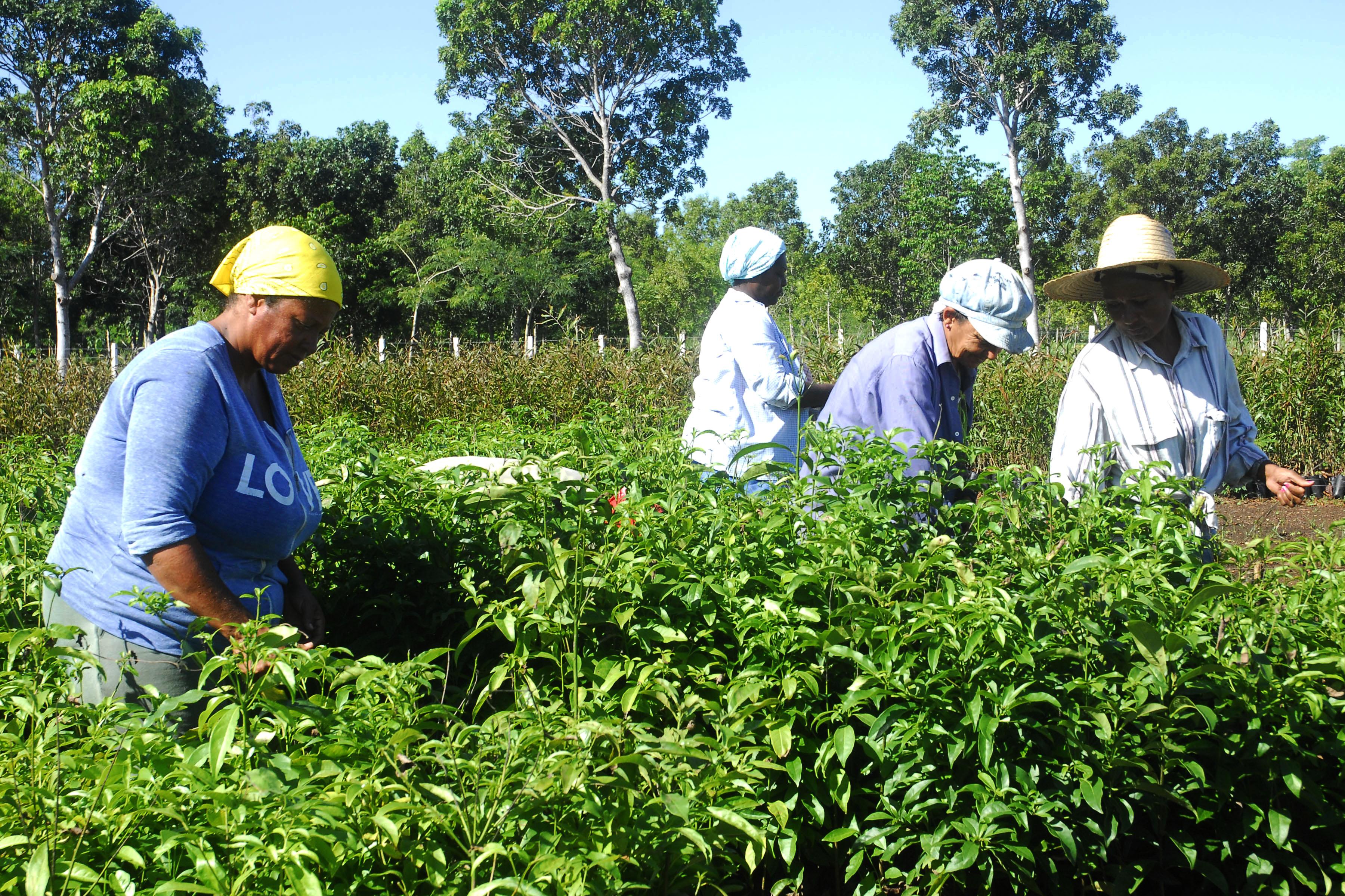Celac reitera compromiso con el desarrollo de la agricultura familiar