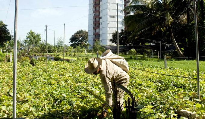 Agricultores garantizarán hortalizas de fin de año en Granma