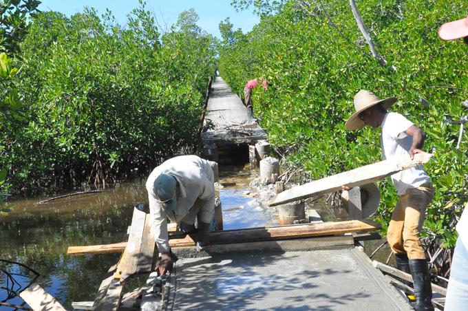 Constructores reparan el sendero de  Las ColoradasFOTO/Rafael Martínez Arias