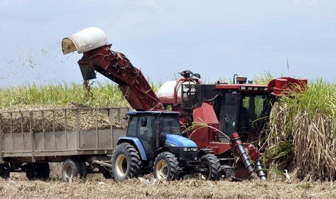 Cuba espera crecer un 12 por ciento en la actual zafra azucarera