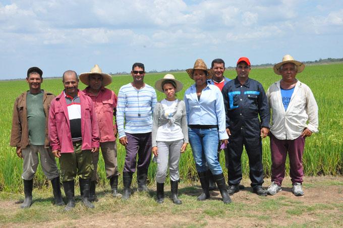Reconocerán a mejores productores de arroz en Granma