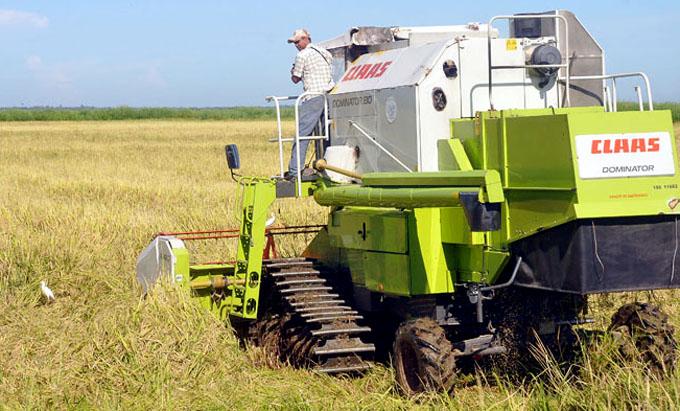 Cumple producción de arroz húmedo empresa Fernando Echenique de Granma