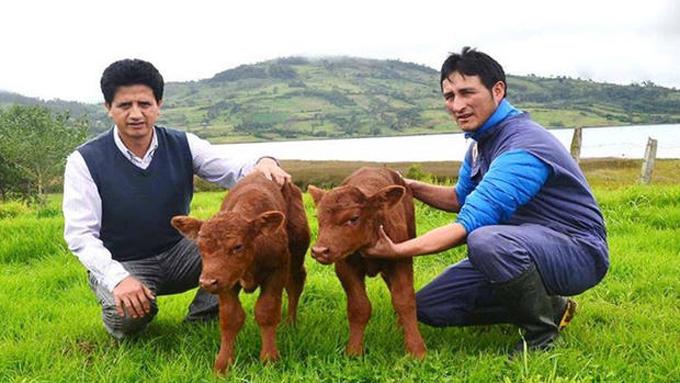 Nace el primer animal clonado en Perú