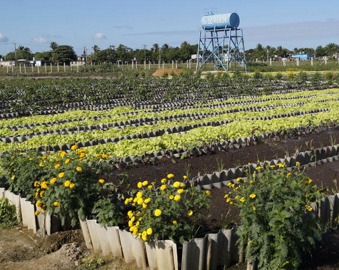 Granma marcha bien en agricultura urbana y suburbana