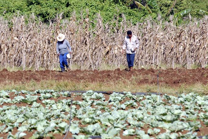 Lanzan convocatoria a Congreso Internacional Agropecuario