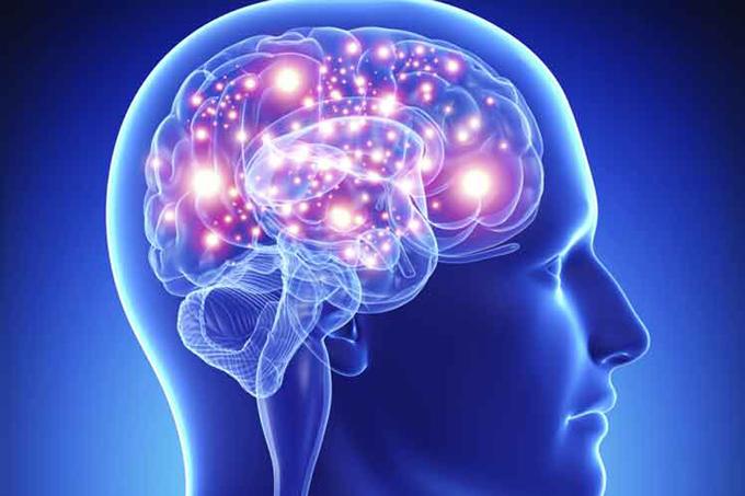 Una parte del cerebro crece más en la adultez, según estudio