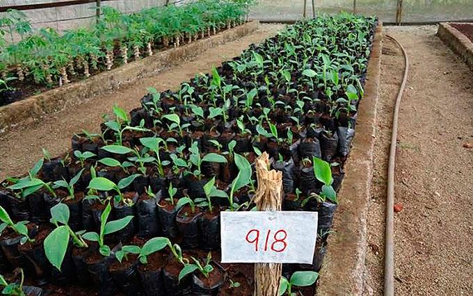Alcances científicos de la agricultura cubana en 2016