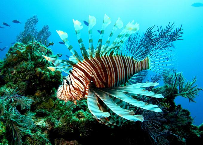 Especies invasoras marinas suscitan interés de científicos cubanos
