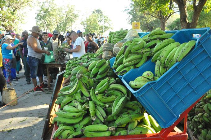 Convocan a  producir más alimentos en Granma
