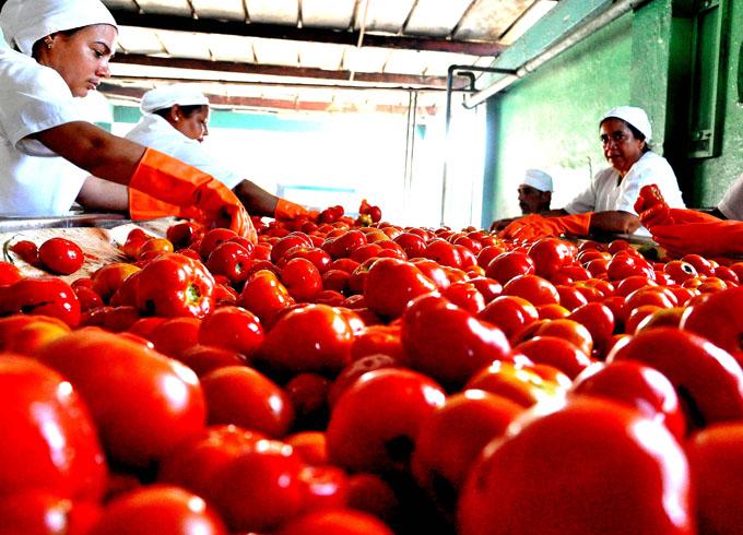 Favorable  producción y contratación de hortalizas en Granma