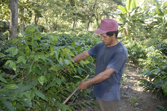 El café, 269 años con los cubanos