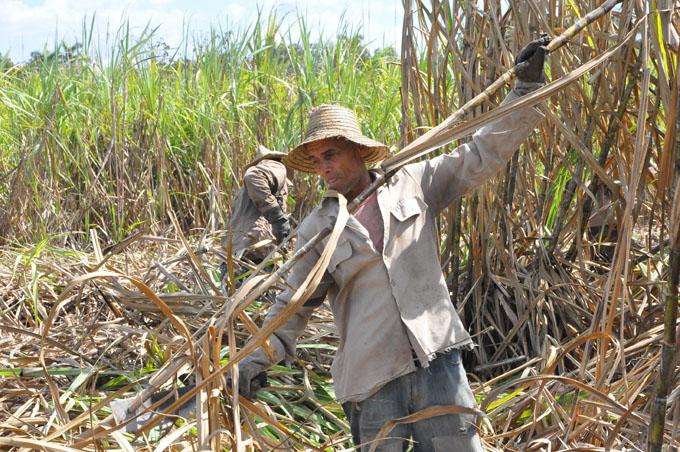 Destacan colectivos en la zafra azucarera