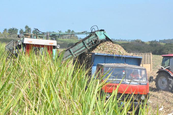 Seleccionan a mejores colectivos en zafra azucarera en Granma
