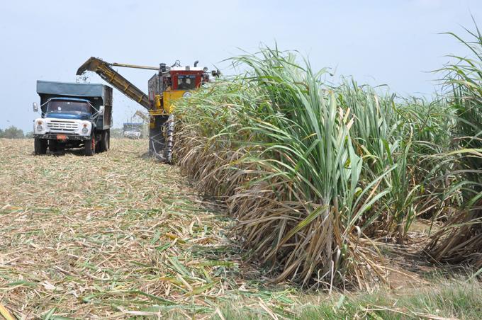 Sobresalen colectivos en zafra azucarera en Granma