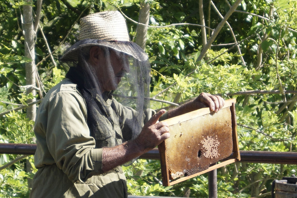 Miel orgánica en la mira de productores de Granma