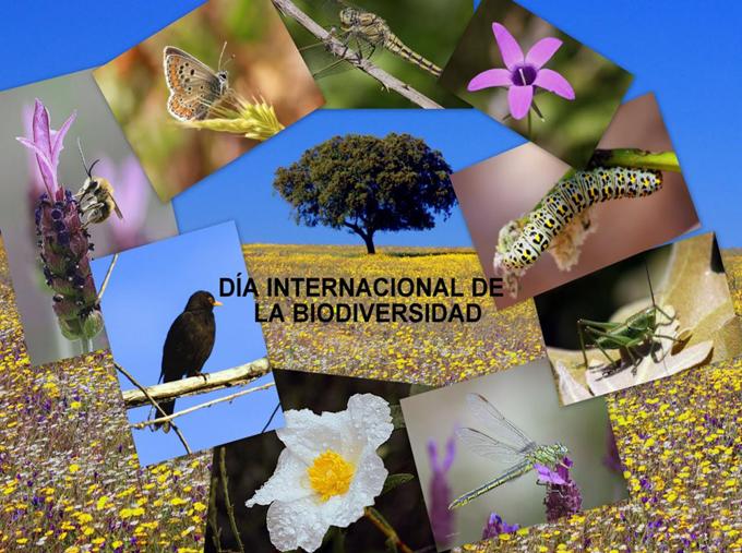 Celebra la FAO Día Internacional de la Diversidad Biológica
