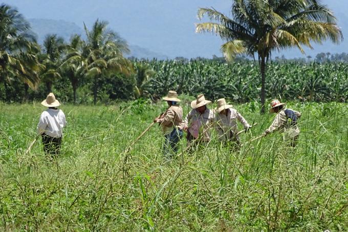 Campesinos cubanos ratifican compromiso impulsar producción agrícola