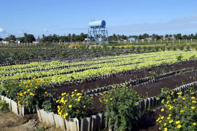Granma necesita mejores resultados en la Agricultura Urbana