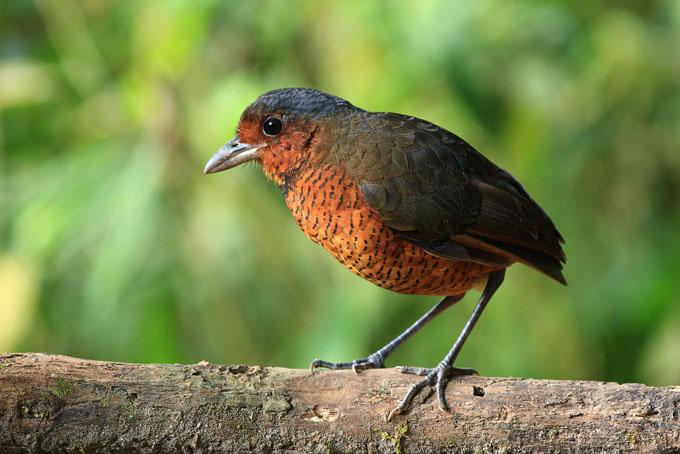 Ecuador entre los países con mayor diversidad de aves en el mundo