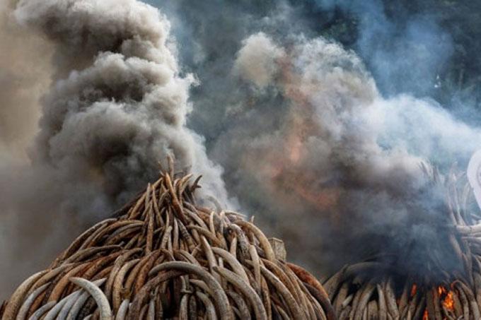 Angola quema una tonelada de marfil y ratifica compromiso ambiental