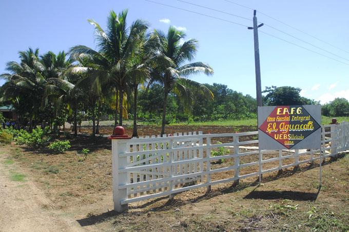 Granma  trabaja  para fortalecer  programa forestal