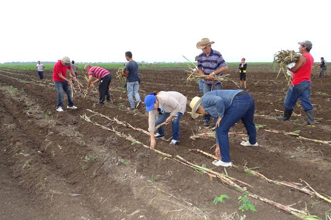 Positiva respuesta en viernes agropecuario en Granma