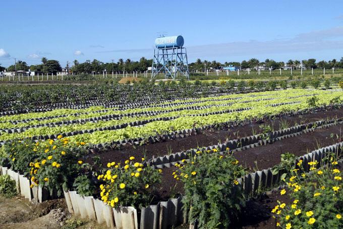 Técnicos agrícolas y forestales de Granma empeñados en producir  más