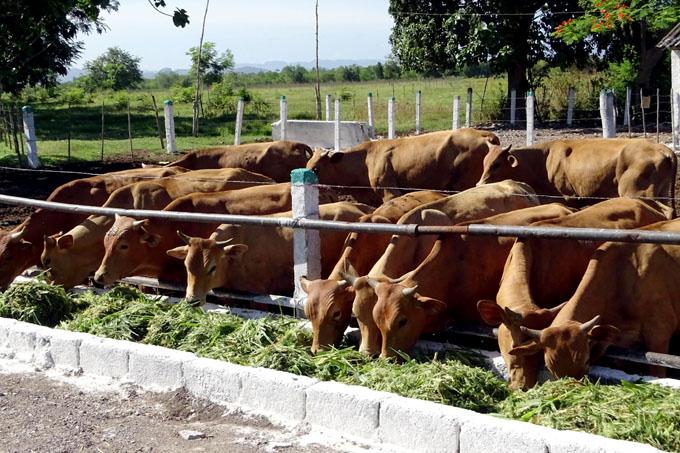 Debatirán hoy diputados situación de la producción agrícola