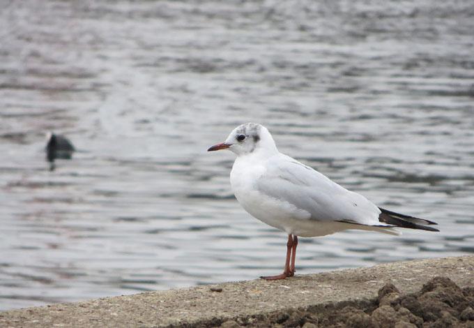 Las aves, importante riqueza natural en cayos del norte de Cuba