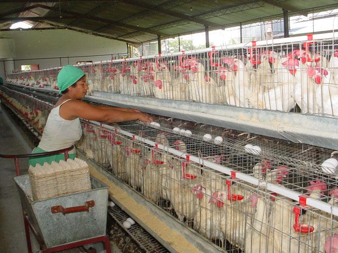 Agricultores trabajan para crecer en  producción de alimentos