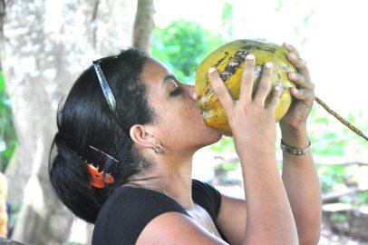 Granma acometerá programa de desarrollo del coco