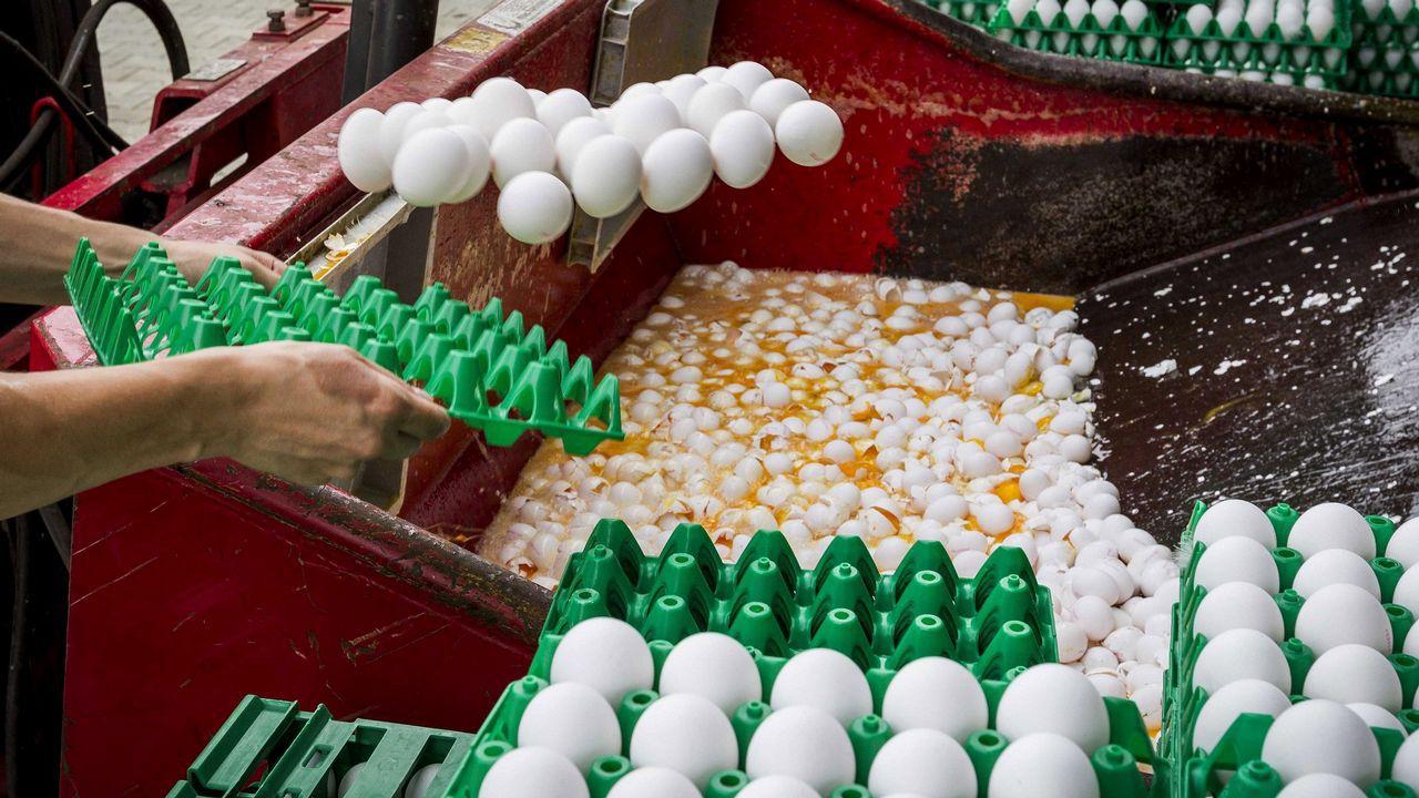 Ministro belga insiste en tema de los huevos contaminados
