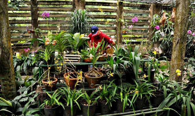 Jardín cubano atesora casi medio millar de orquídeas