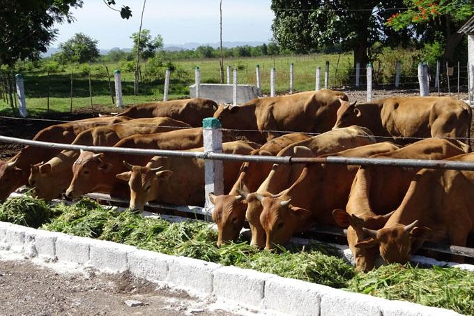 Convocan a Evento nacional de Economía Agropecuaria