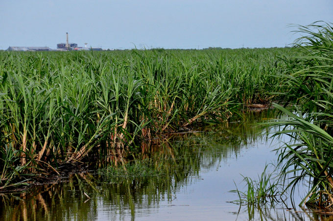 Agilizan acciones  de drenaje  en cañaverales en Granma