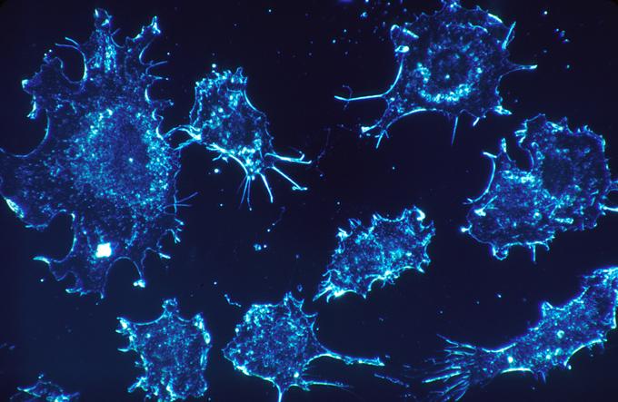 China abrirá laboratorio para investigar virus contagiosos