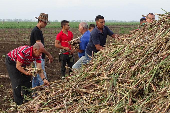 Multiplicar Viernes agropecuarios en Granma