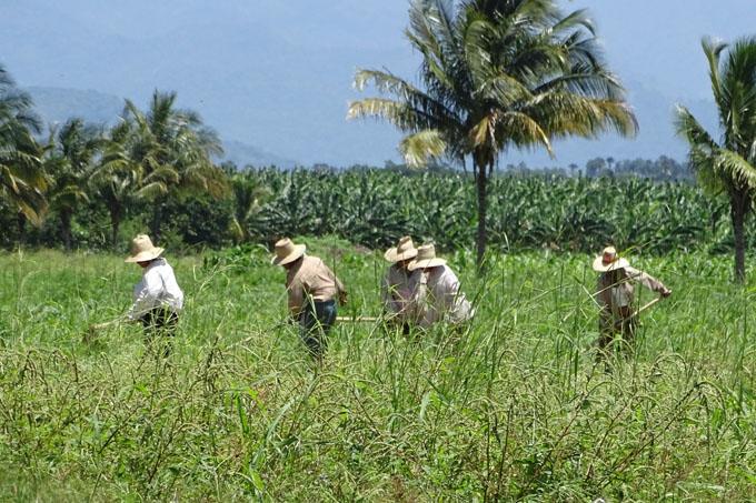 Campesinos van por más producción en Granma