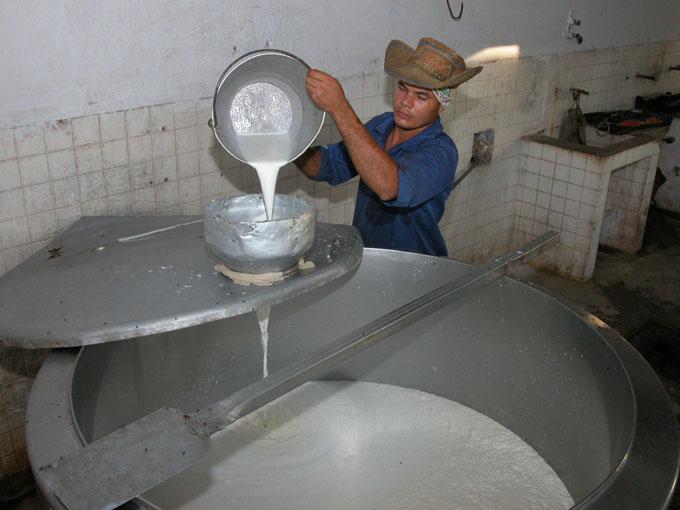 Exceden plan en producción de leche de vaca