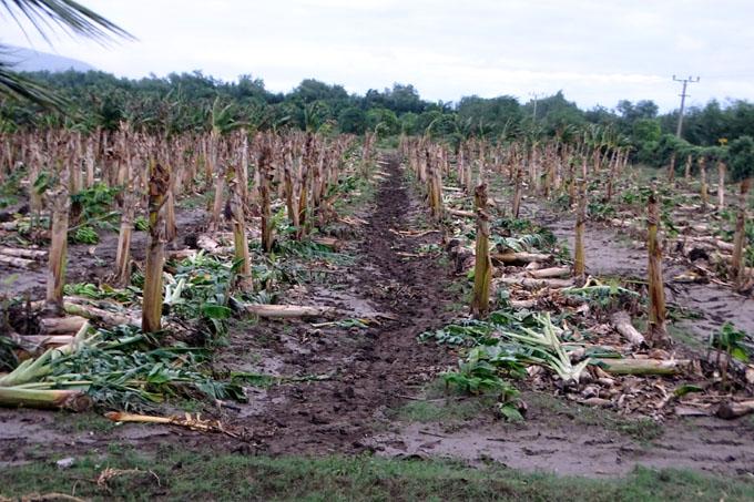 Lluvias intensas y vientos fuertes causan daños a la agricultura en Pilón (+ fotos, videos y audios)