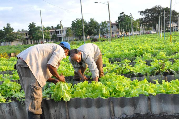 Obtiene Granma calificación de bien en Agricultura Urbana y Suburbana