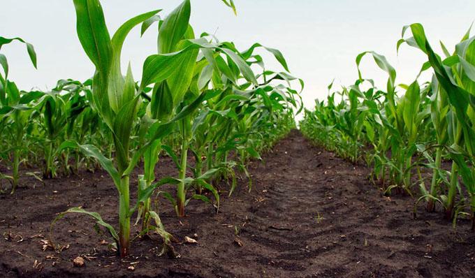Destaca FAO importancia de los suelos para la seguridad alimentaria
