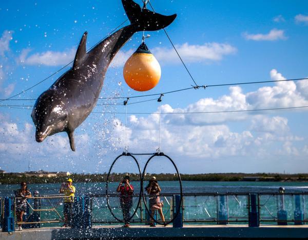 Activo el mayor delfinario de Cuba con atrayentes ofertas