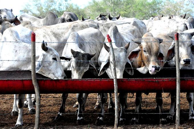 ¿Conoce los principales resultados de la biotecnología agropecuaria cubana?