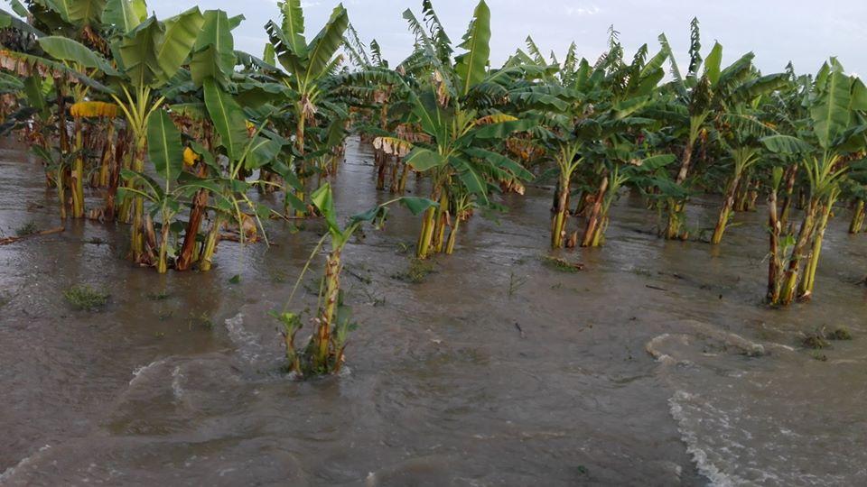 Afectaciones por inundaciones en Manzanillo