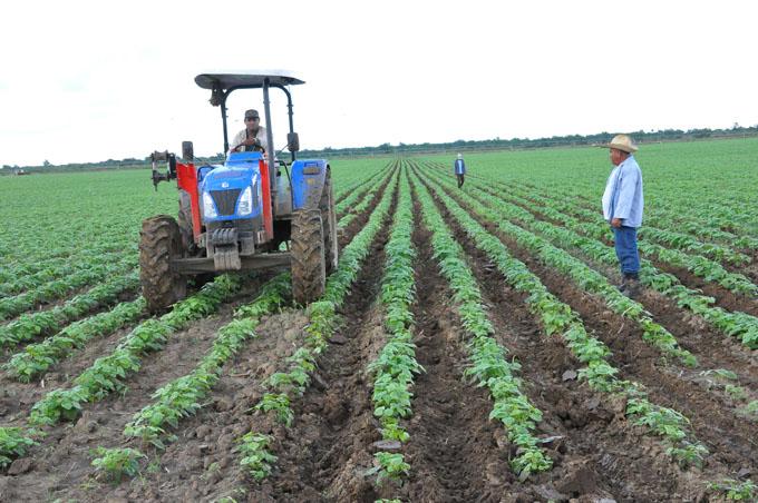 Por superar retos sector agrícola en Granma (+fotos)